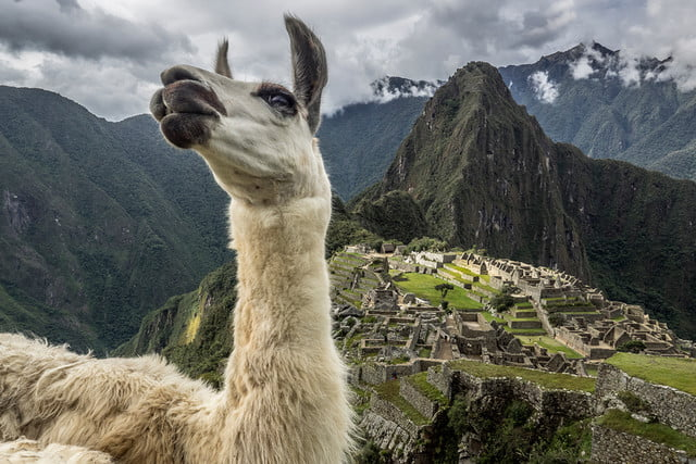photographer jay dickmans adventurous spirit 03 machu picchu llama