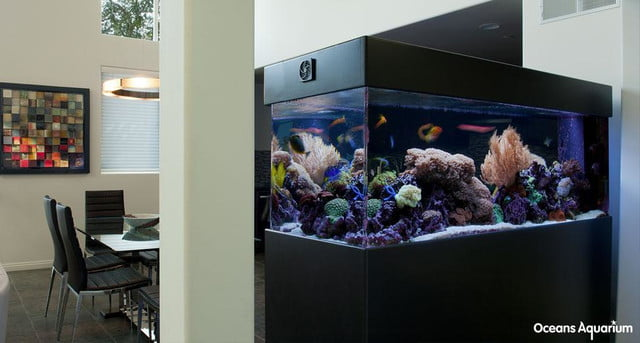 homes with their own shark tanks 9