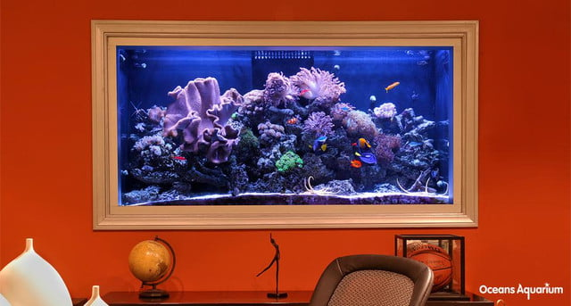 homes with their own shark tanks bg8