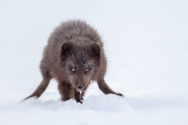 how to photograph the arctic with joshua holko interview mg 6008 edit