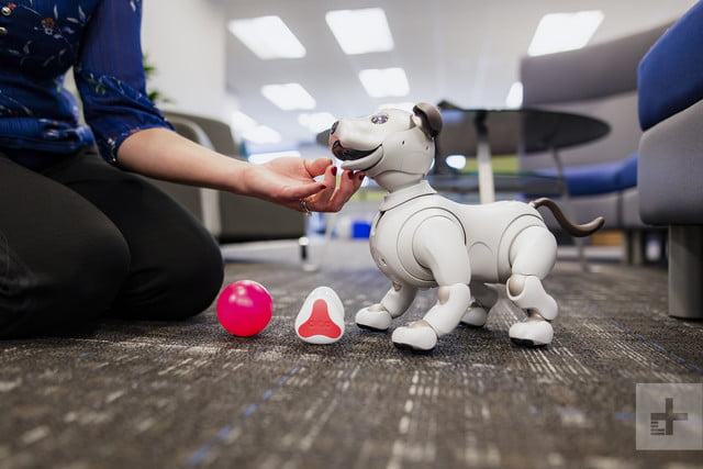 Can Aibo replace Fido? I fostered Sony's robot dog for a