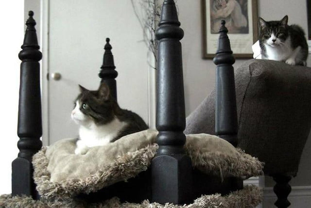 furniture and homes that are made for cat people gypsy barn bed