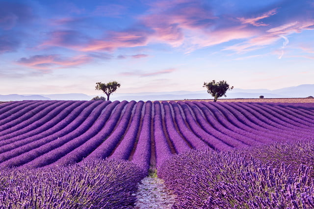 what are the biggest color trends in photography study suggests these bold hues shutterstock 509596870