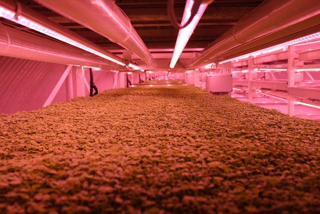 londons underground farm zero carbon food growing led lighting